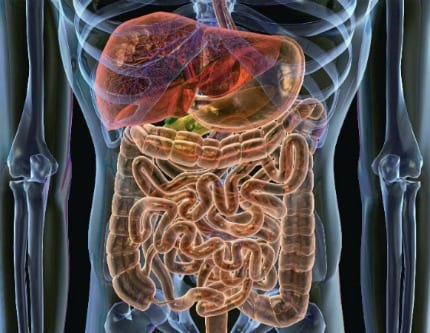 Noticias en obesidad e hipertensión arterial