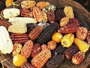Maravillas del maíz