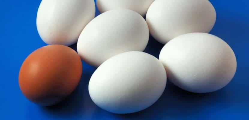 Recetas con clara de huevo