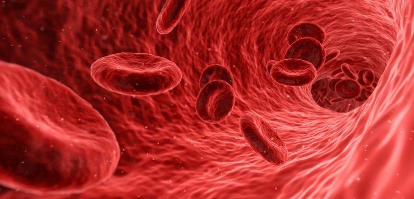 glóbulos rojos en las arterias