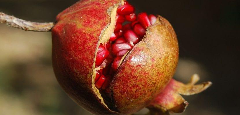fruta granada abierta