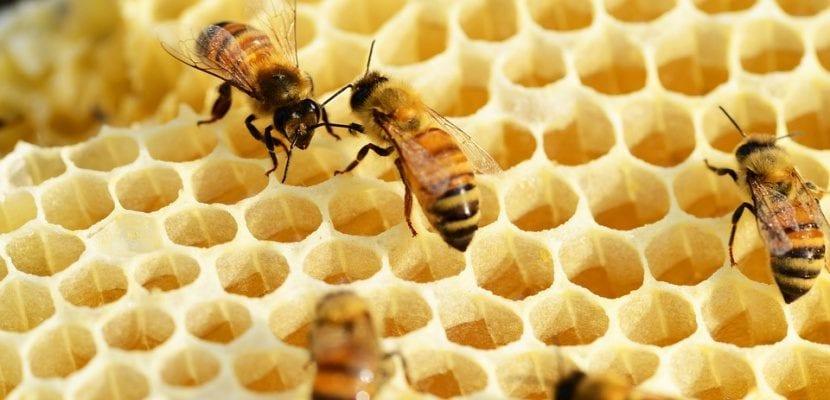 abejas y su panal